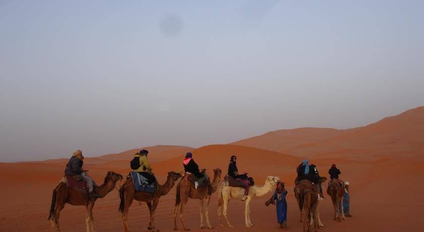 an overview of the camel A variable rate of seroprevalence of blue tongue virus in camels has been reported from various parts of the world serotype specific antibodies have also been detected.