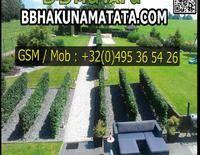 B&B Hakuna Matata