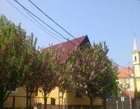 Rózsa Vendégház