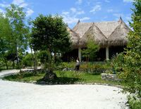 Sea Turtle House