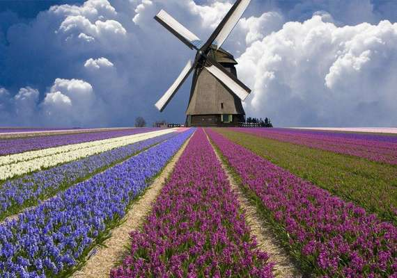 Amsterdam şehir Rehberi Amsterdam şehrinde Ne Yapılır