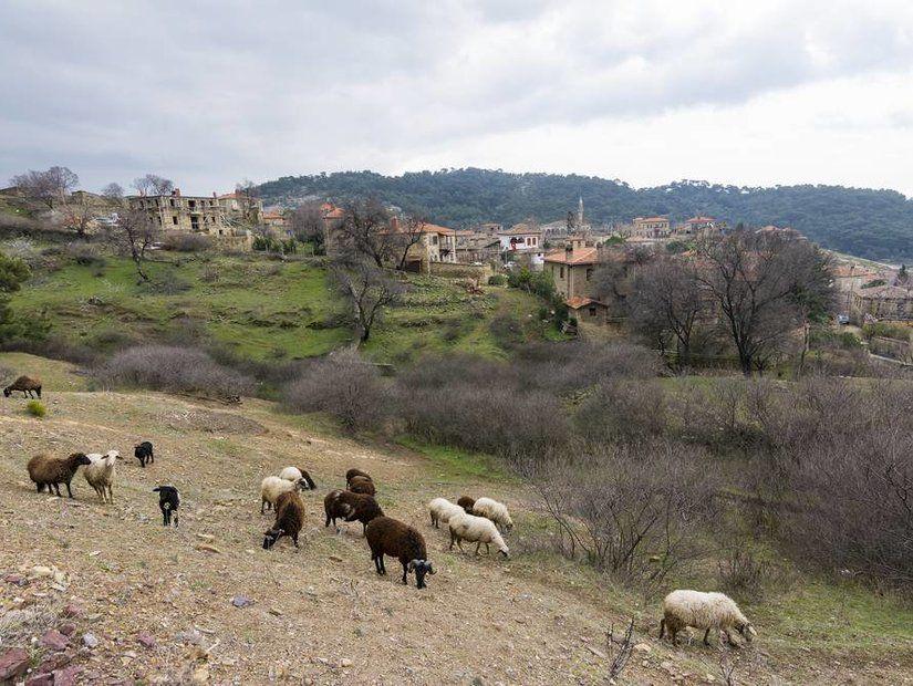 Kaz Dağları'nın huzurlu komşusu: Adatepe