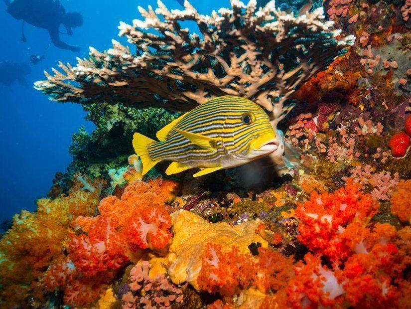 8-National Aquarium