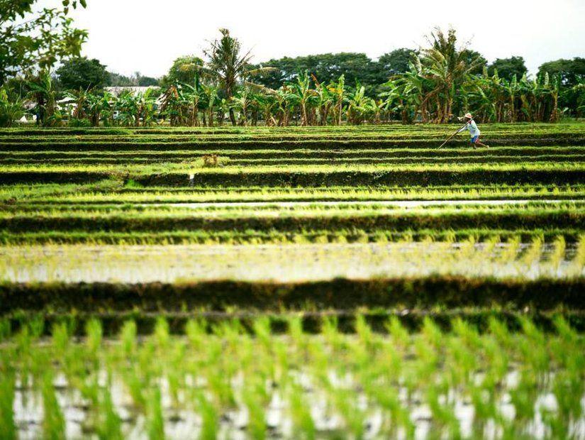 3- Bali'de hava durumu