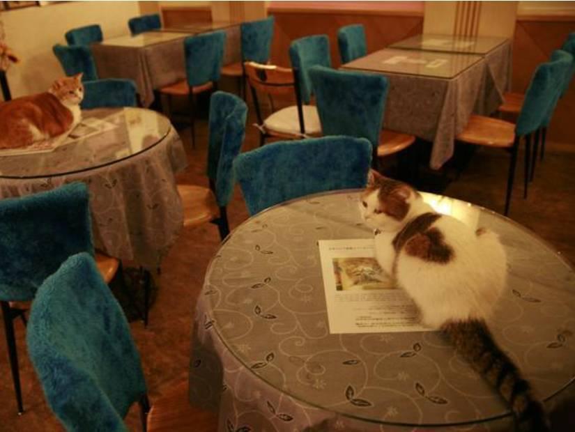 Café & Cats 1998 – Taipei