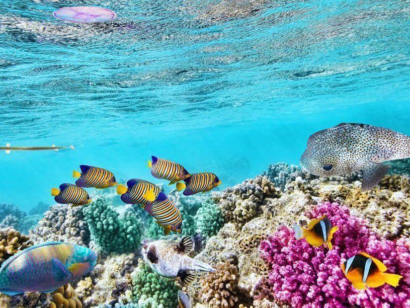 1- Büyük Set Resifi dalışı