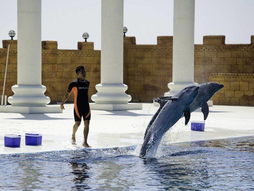 Troy Aqua Dolphinarium