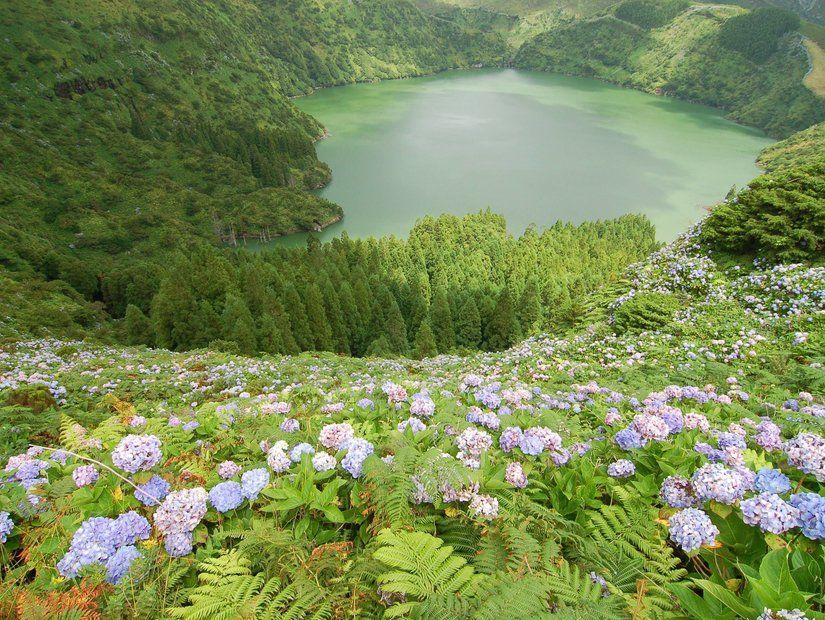 Flores Adası