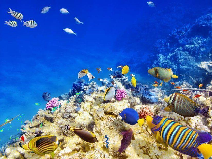 8- Büyük Set Resifi – Avustralya
