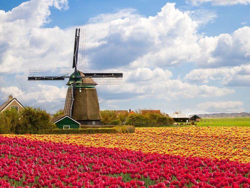 1- Hollanda'nın lale tarlaları