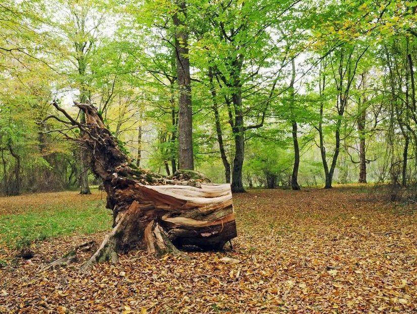 3- Doğada kamp macerası
