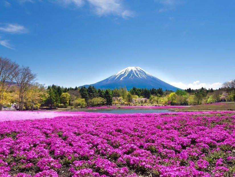 2- Japonya'daki Shibazakura Vadisi