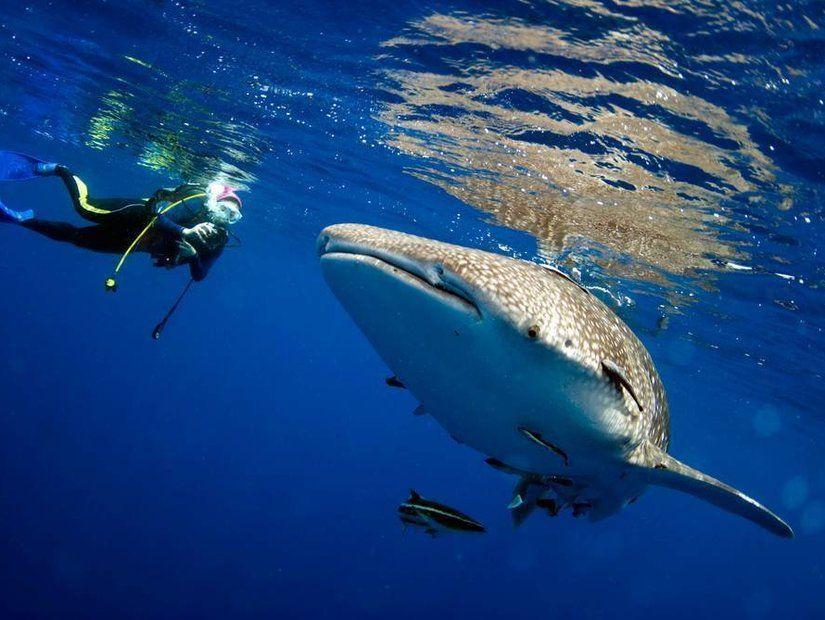 3- Köpekbalıklarıyla heyecan dolu bir dalış