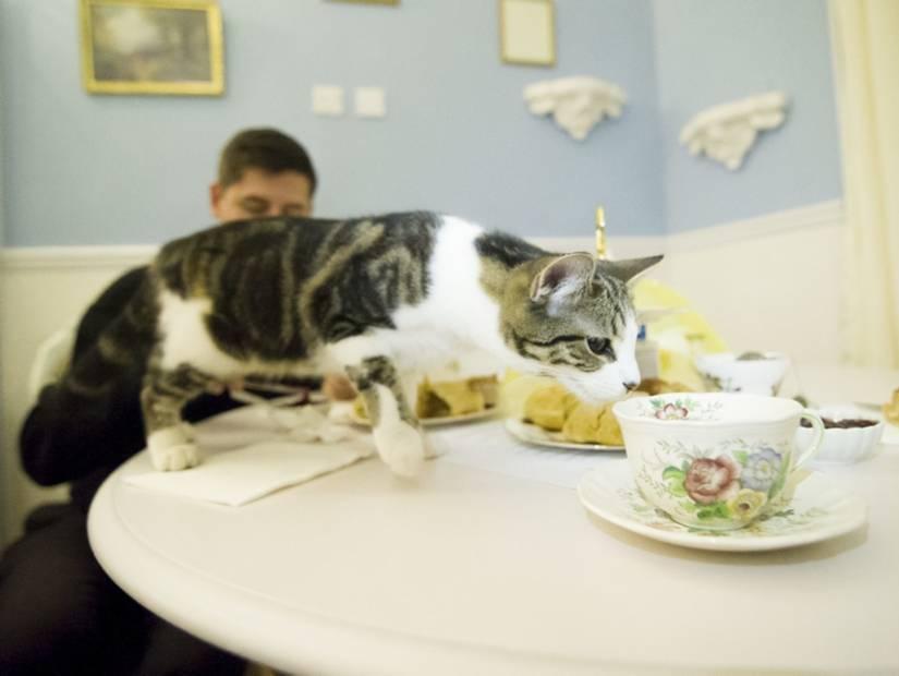 Lady Dinah's Cat Emporium – Londra