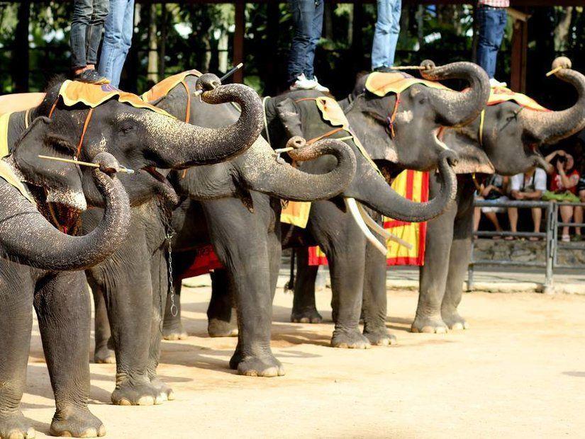 4- Dev fillerle macera dolu bir gün