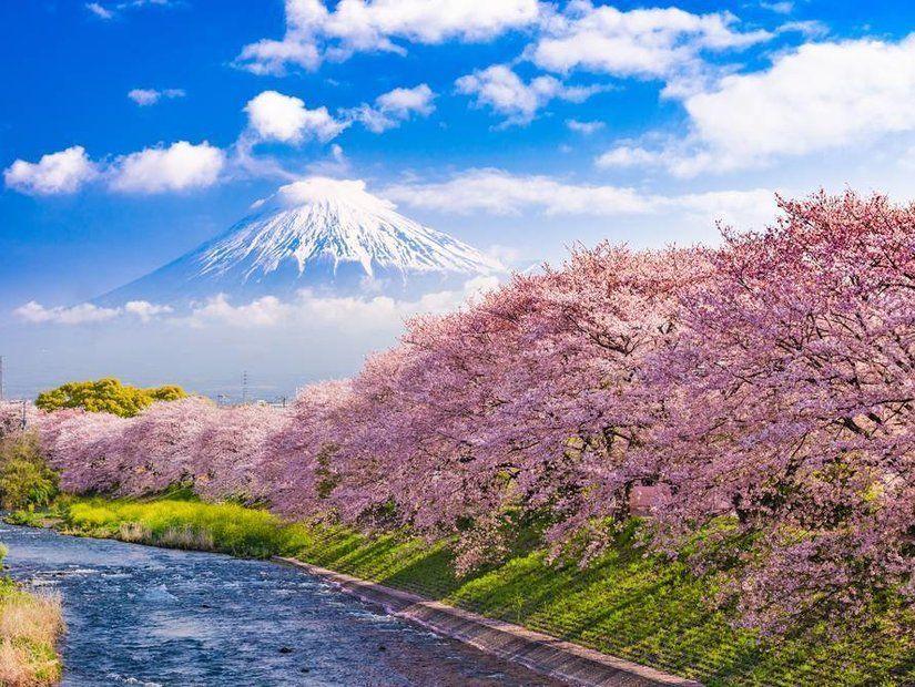 Tokyo'nun sakurası
