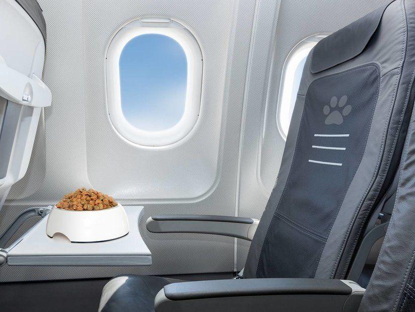 Hayvan dostlarımızla uçak yolculuğu nasıl yapılır?