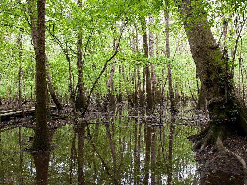 Doğal yaşam ve ekoloji