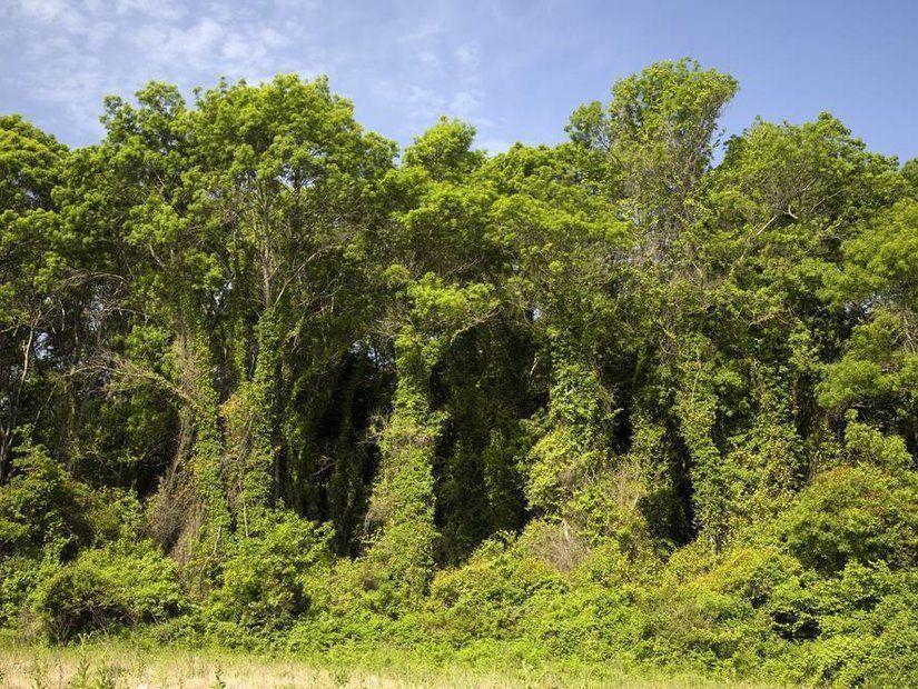 1- Dünyanın sayılı longoz ormanlarından biri