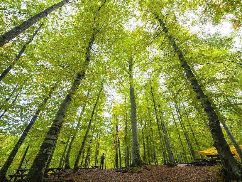 Yeşile uzanan yol
