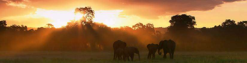 Serengeti - Tanzanya