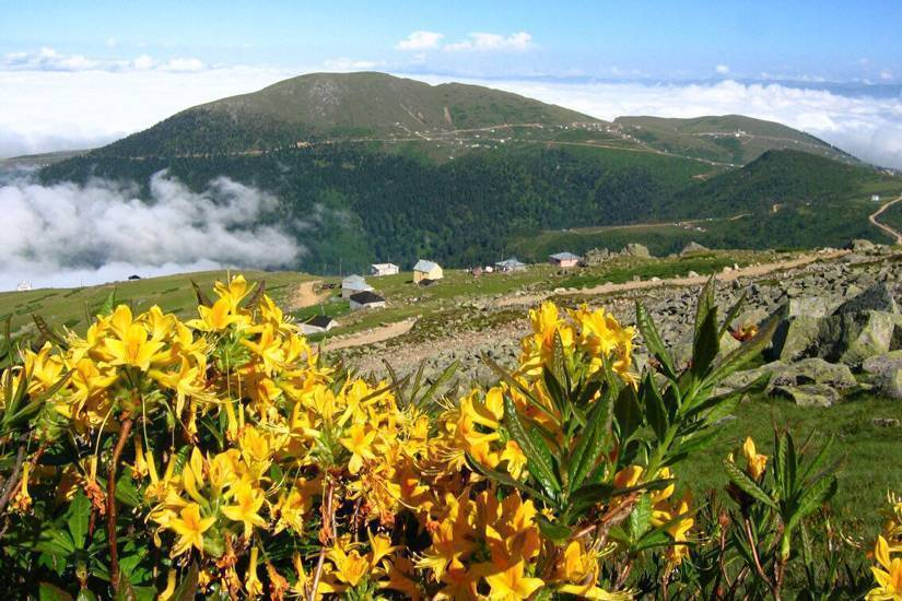 4-Giresun Sis Dağı Yaylası: